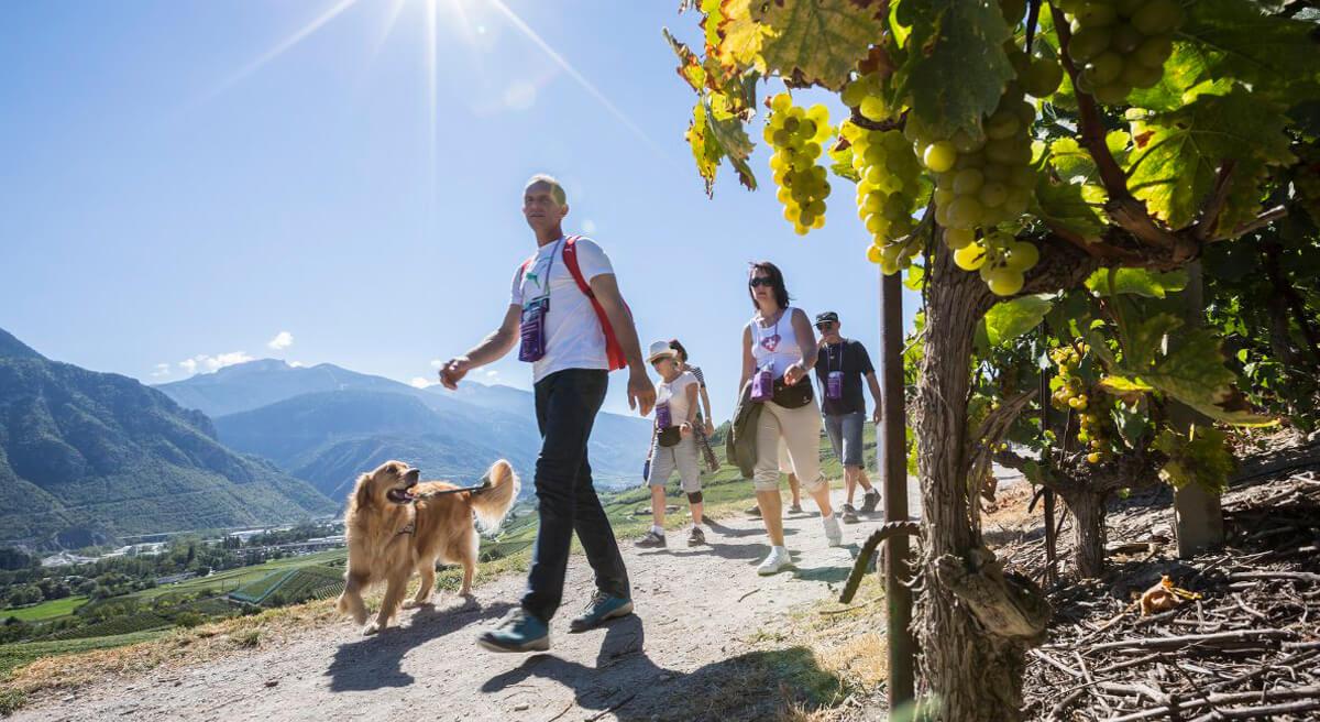 Salgesh Wine Tourism Experience