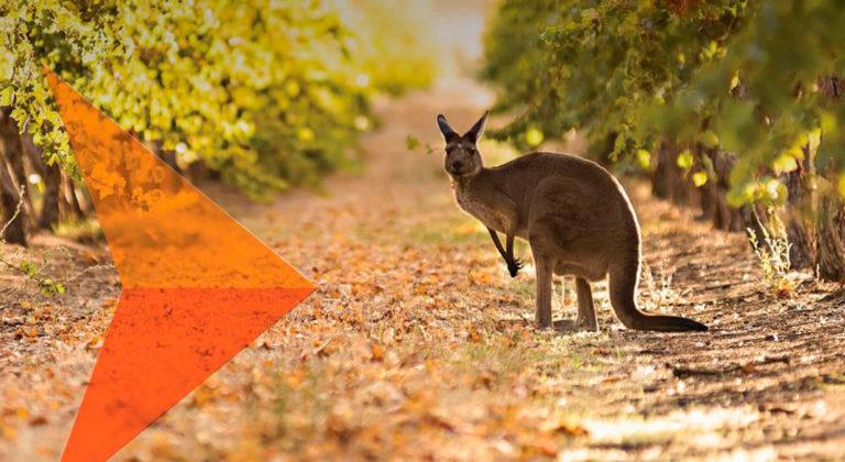 2020 South Australian Wine Industry Snapshot