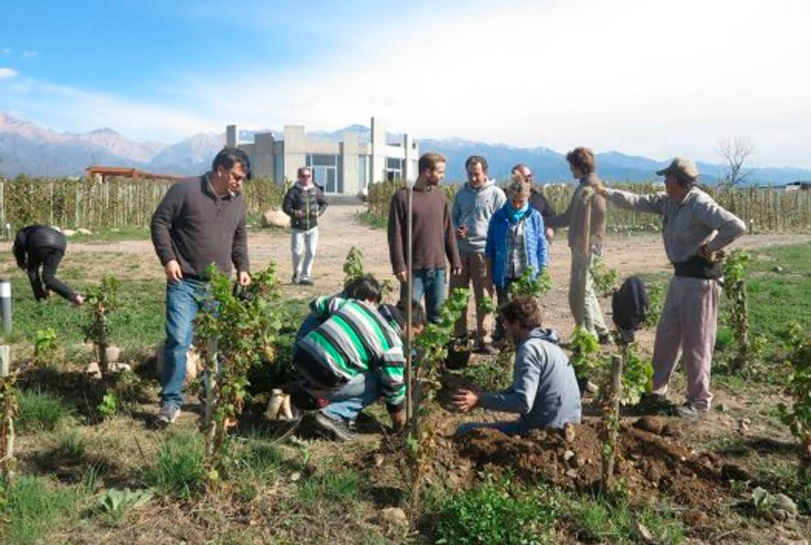Actions for sustainability in Argentinean Viticulture