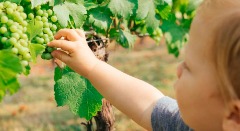 Cultivating the knowledge of wine in Mendoza