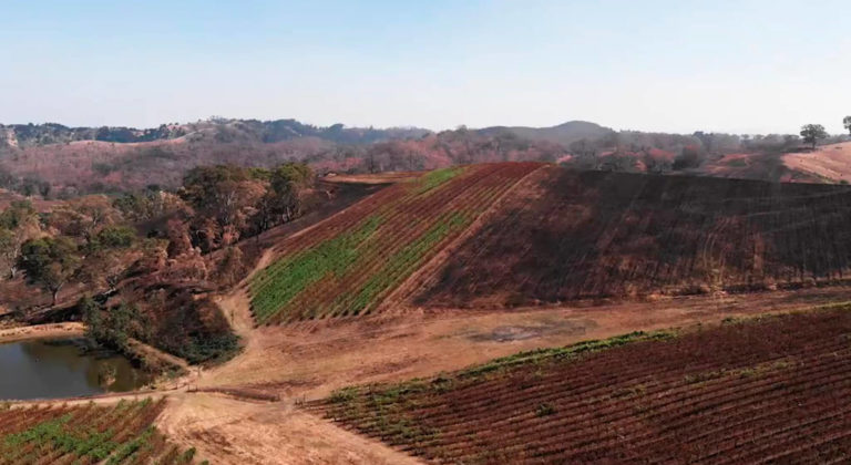 Forest fires and impact on grapevines: understanding smoke taint