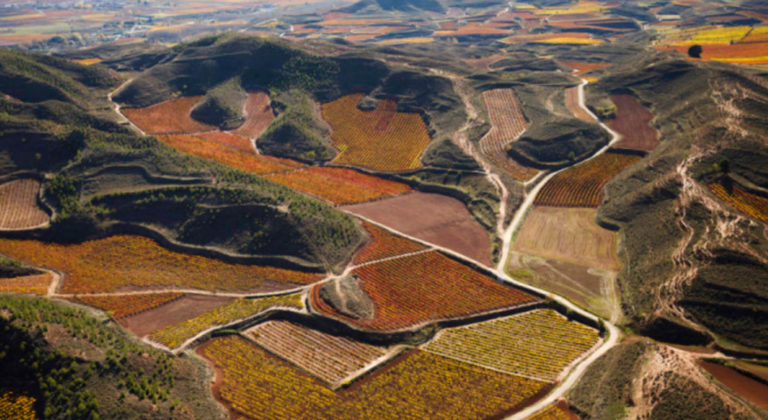 High-level e-learning platform to improve your knowledge about wines from Rioja
