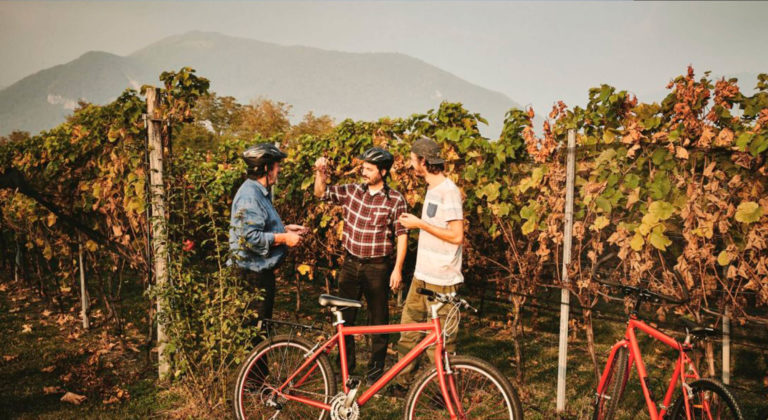 Mendrisiotto Terroir : a personal wine and tourism experience in the Southern Swiss Alps!