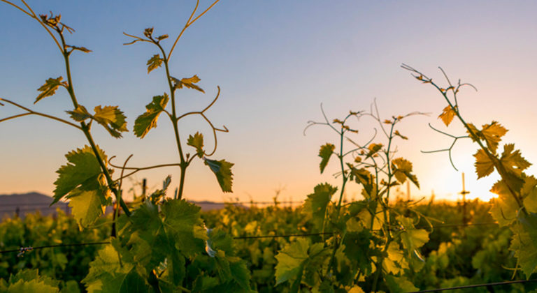 NVV Makes Historic $1 Million Commitment to Increase Diversity in Wine Industry