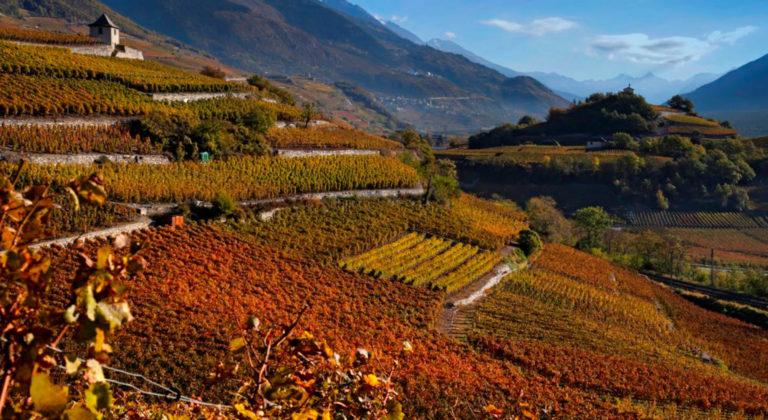 Wine Experience in Salgesch – Lausanne Region