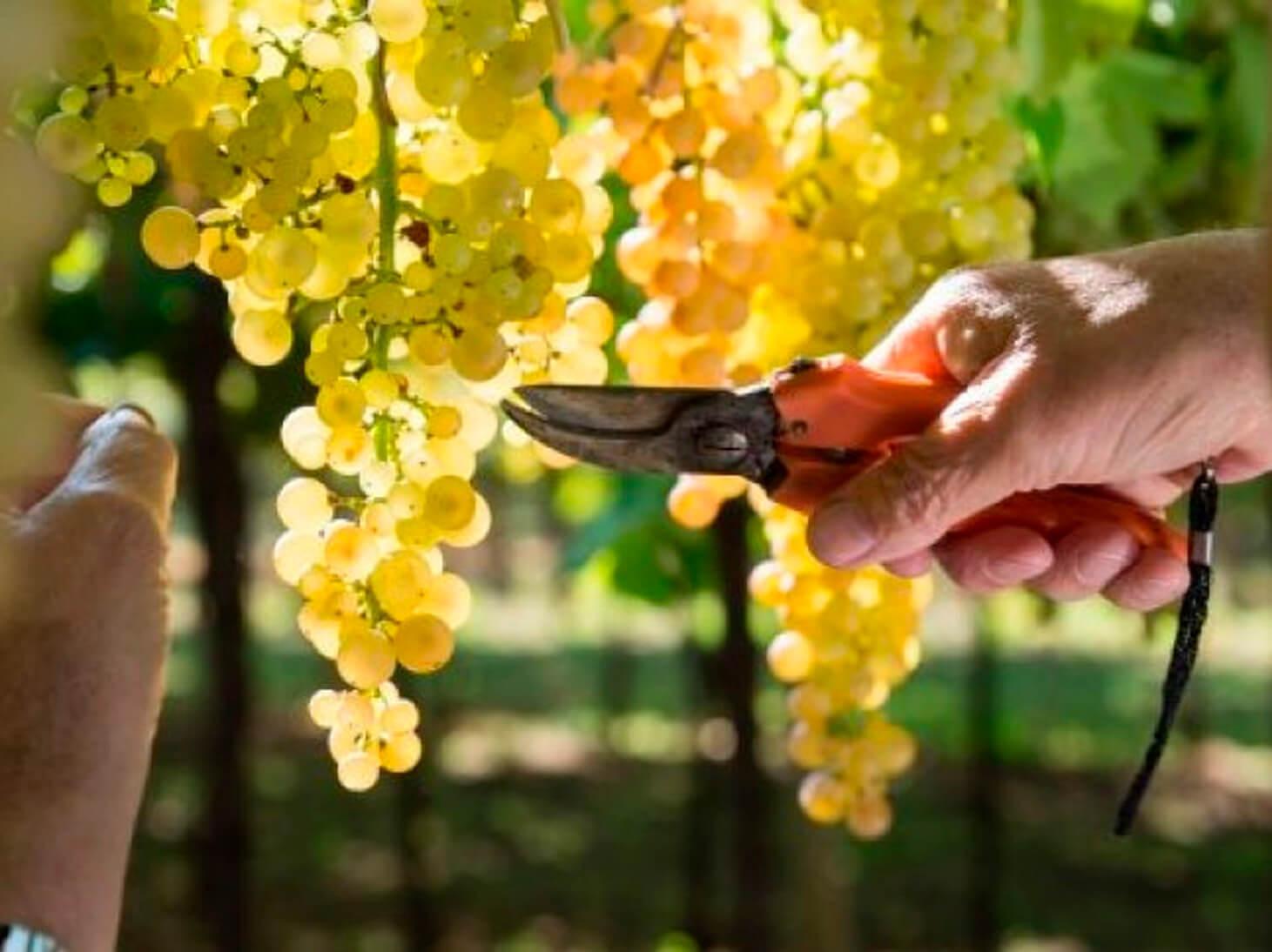 Wine and Sustainability in Verona