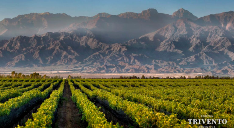 Wineries in Mendoza choose sustainability