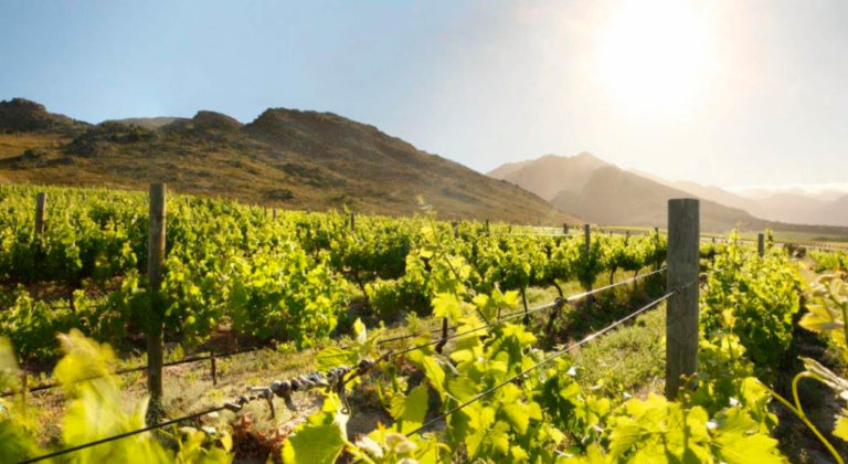 Initiatives to reduce carbon impact in the wine tourism industry in the Cape