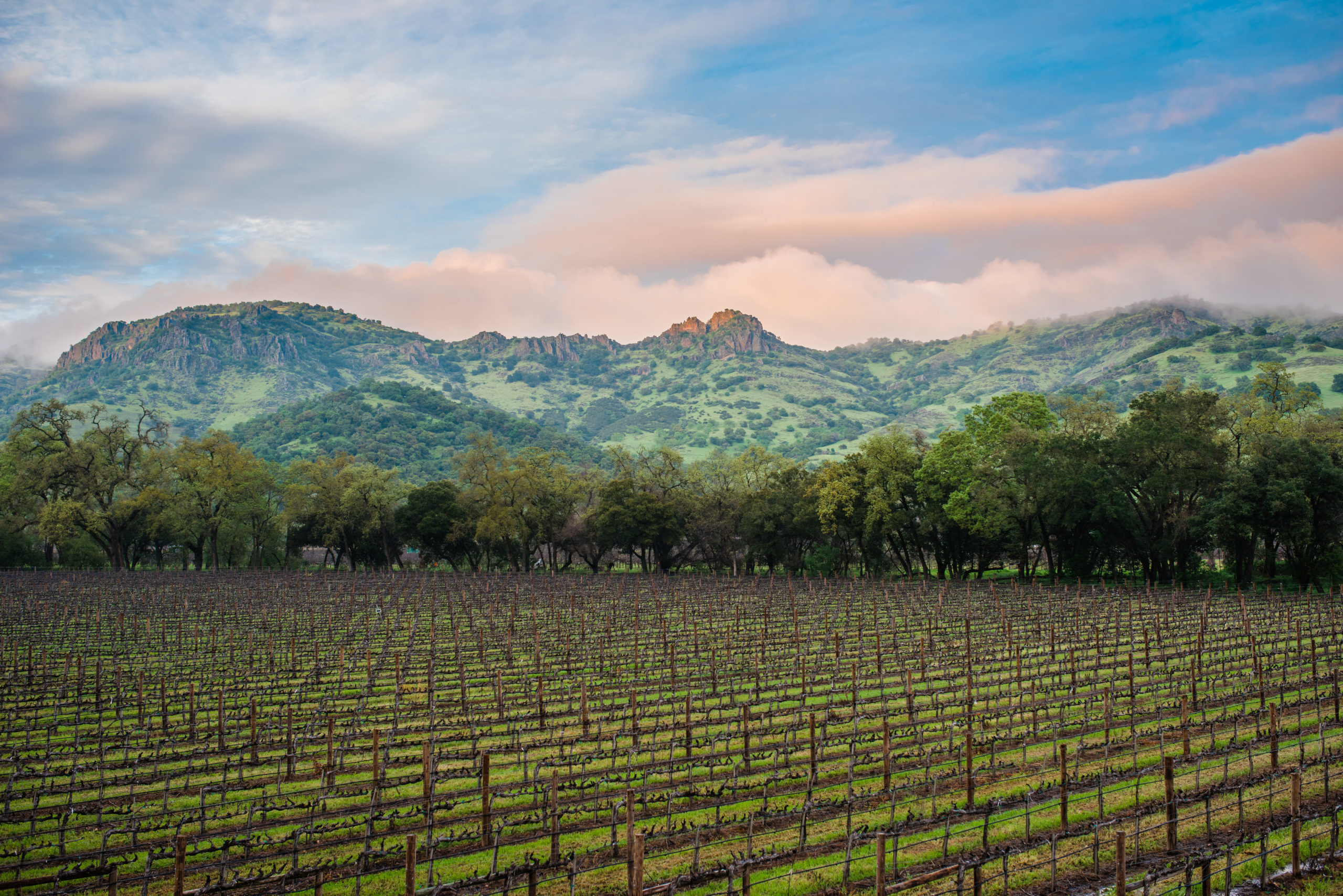 The Future of Wine Tourism in Napa Valley