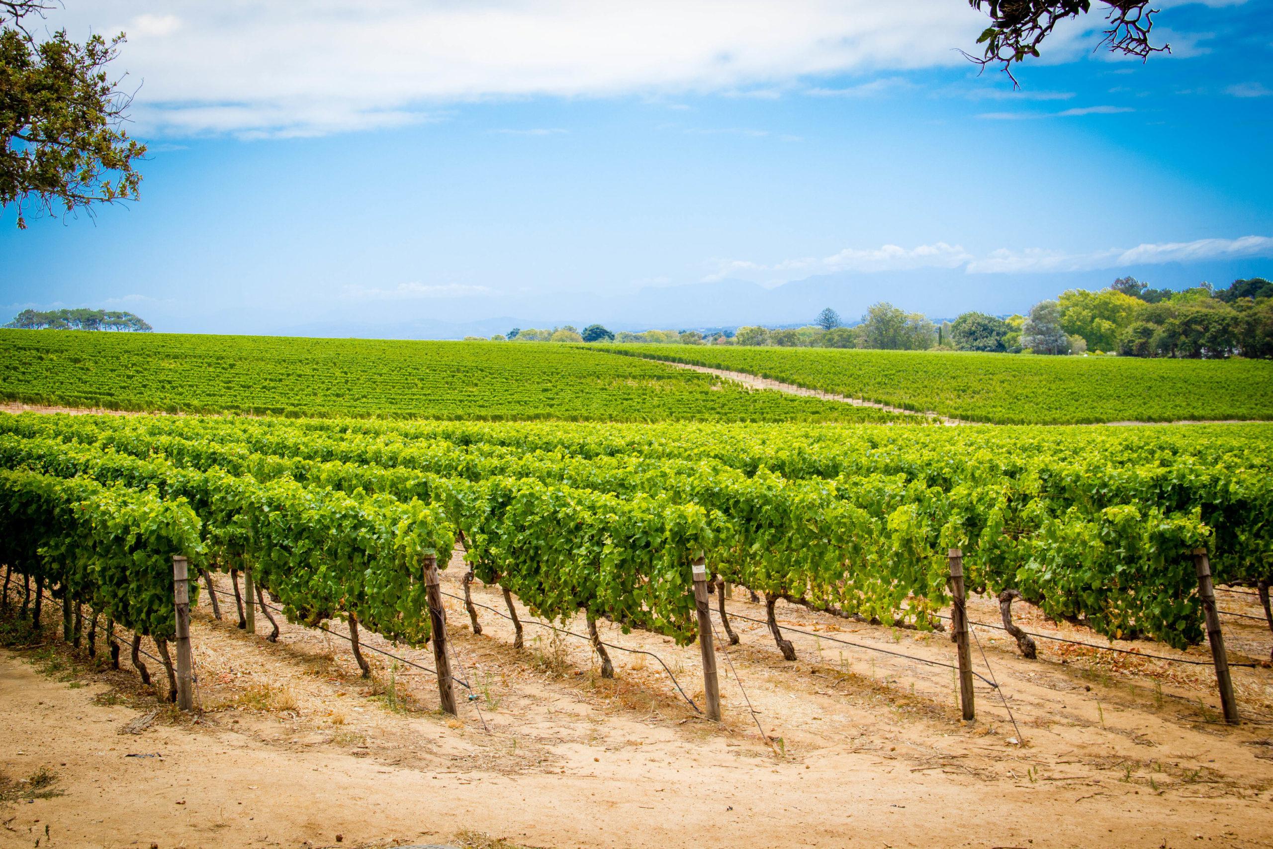 Cape Town & Cape Winelands Wine Future