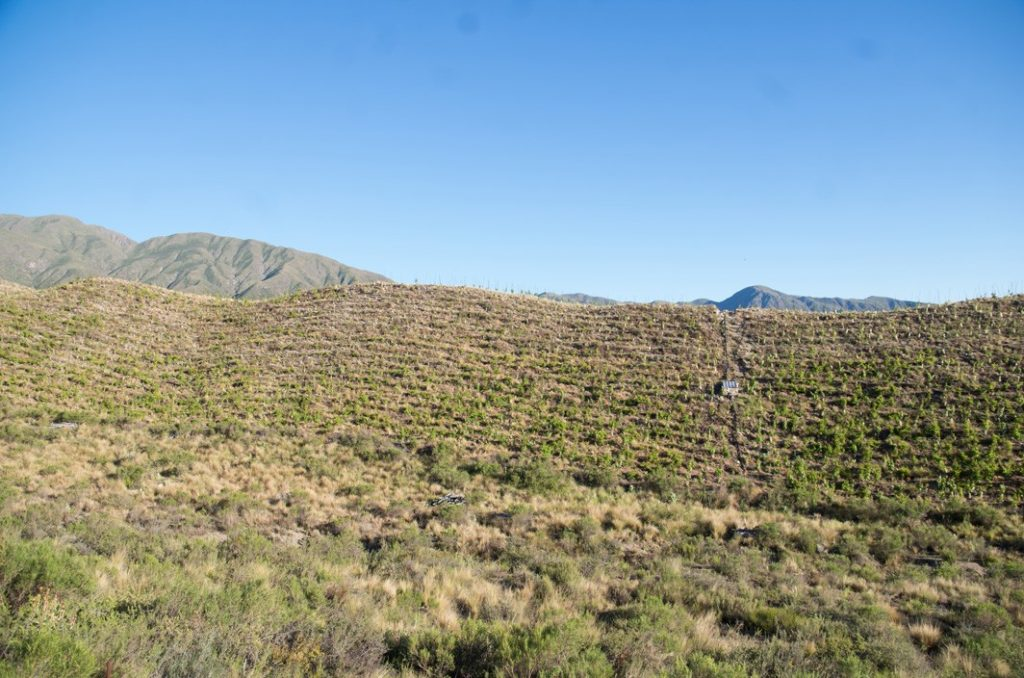 Matervini Vineyards on a slope