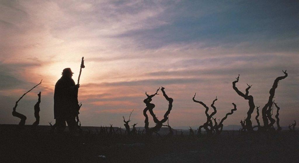 A pilgrim at dawn in Rioja.