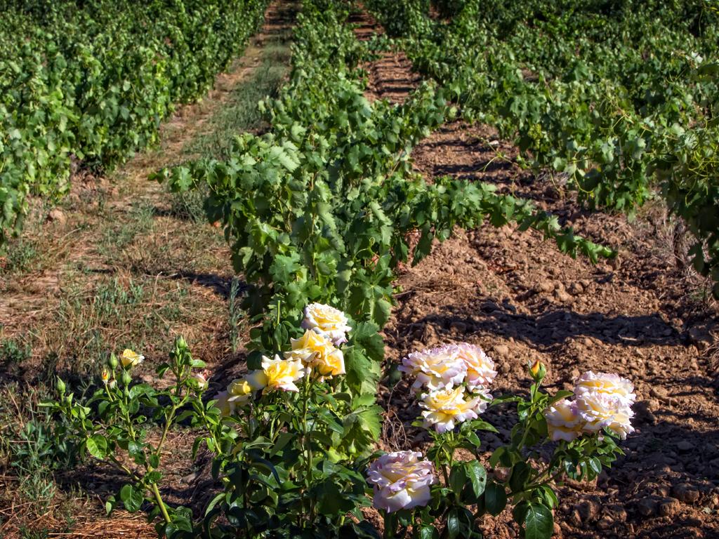 Rioja's Rising Stars